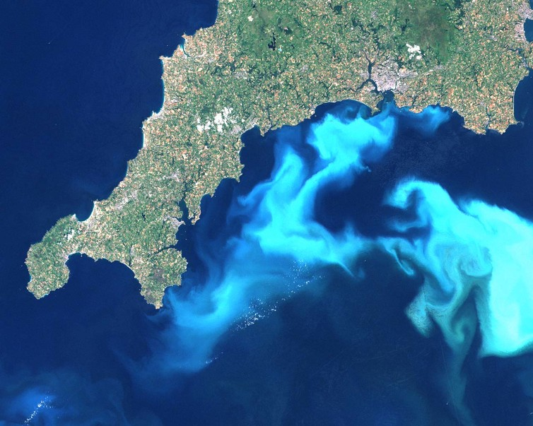 The white clouds in the water are actually light reflected from billions of coccoliths. - Image Credit:  Wikimedia