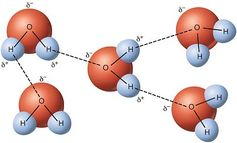 Hydrogen bonds.Wikimedia Commons,CC BY-SA