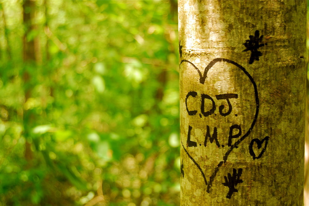 Love is eternal, or at least as long as the tree lasts. - Image Credit: Scott Meis/Flickr, CC BY-ND