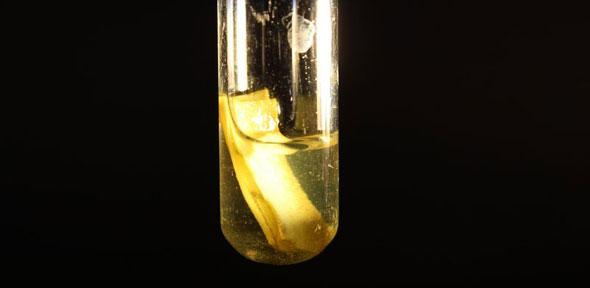 Paper releasing gaseous hydrogen under solar light - Image Credit: Dept of Chemistry University of Cambridge