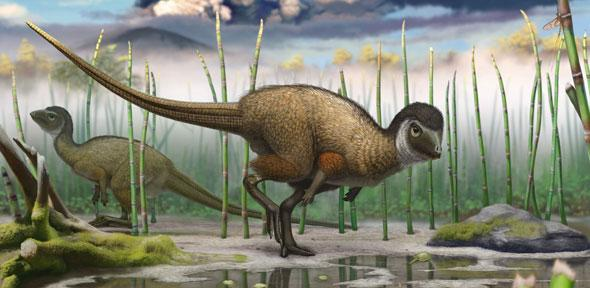 Kulindadromeus, a small bipedal ornithischian dinosaur that is now part of the new grouping Ornithoscelida and identified as more obviously sharing an ancestry with living birds - Image Credit: Pascal Godefroid