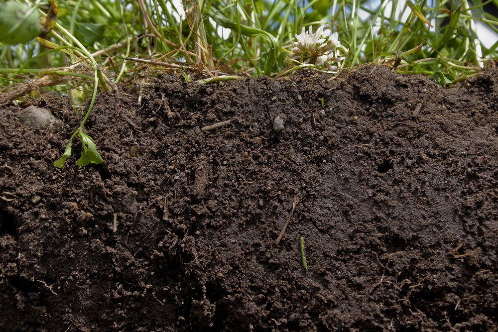 Planting a diverse blend of crops and cover crops, and not tilling, helps promote soil health. - Image Credit: Catherine Ulitsky, USDA/Flickr, CC BY