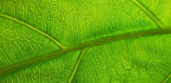 Close-up of a leaf showing its veins - Image Credit:  Christoph Rupprecht