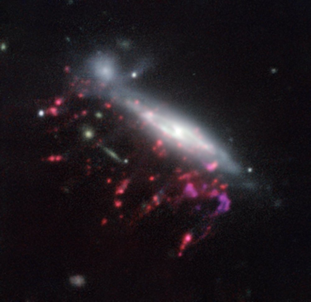 This picture of one of the galaxies, nicknamed JO204, from the MUSE instrument on ESO's Very Large Telescope in Chile, shows clearly how material is streaming out of the galaxy in long tendrils to the lower-left. Red shows the glow from ionised hydrogen gas and the whiter regions are where most of the stars in the galaxy are located. Some more distant galaxies are also visible. - Image Credit: ESO/GASP collaboration