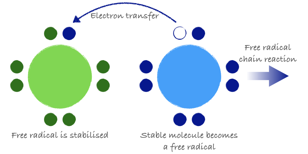 A free radical can steal an electron from another molecule, which then becomes a free radical.