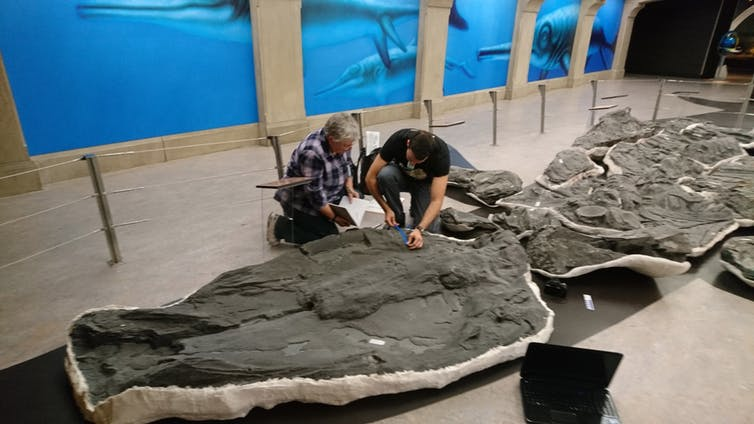 Looking for clues.Dean Lomax/Royal Tyrrell Museum, Alberta, Canada,Author provided