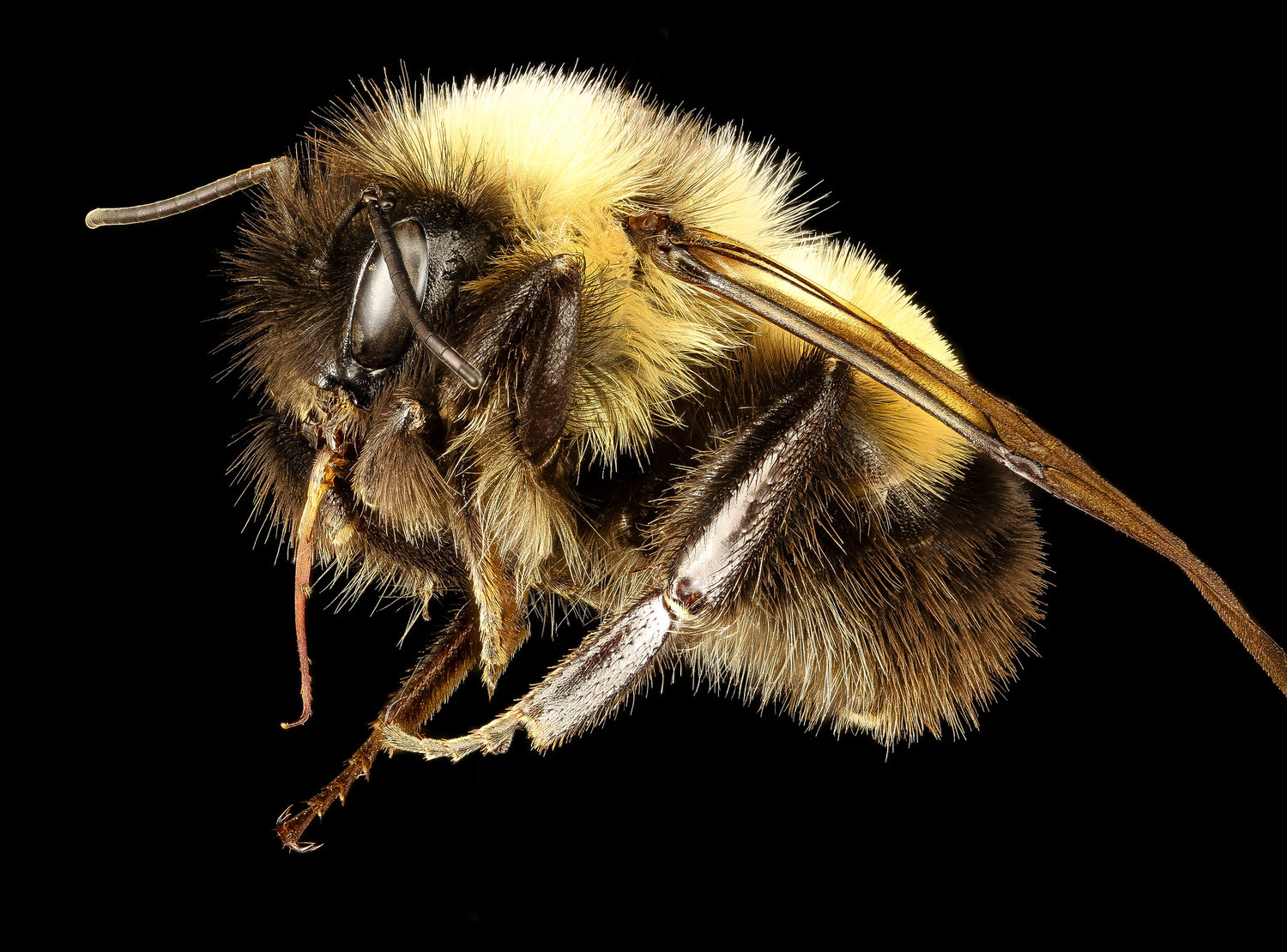 honey bees disappearing - HD1500×1110