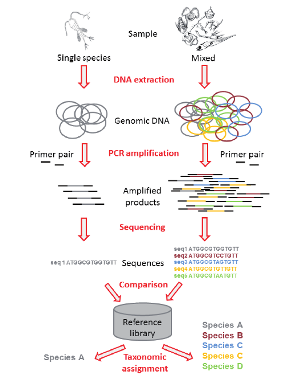 Schematic representation of the processes of DNA barcoding, left, and metabarcoding, right. Colored circles represent extracted genomic DNA, which is composed of the genome of one individual (barcoding) or of multiple copies of the genomes of all the species composing the samples (metabarcoding). - Image Credit:  Corell and Rodriguez-Ezpeleta, 2014. ,  CC BY-ND  - (click to enlarge)