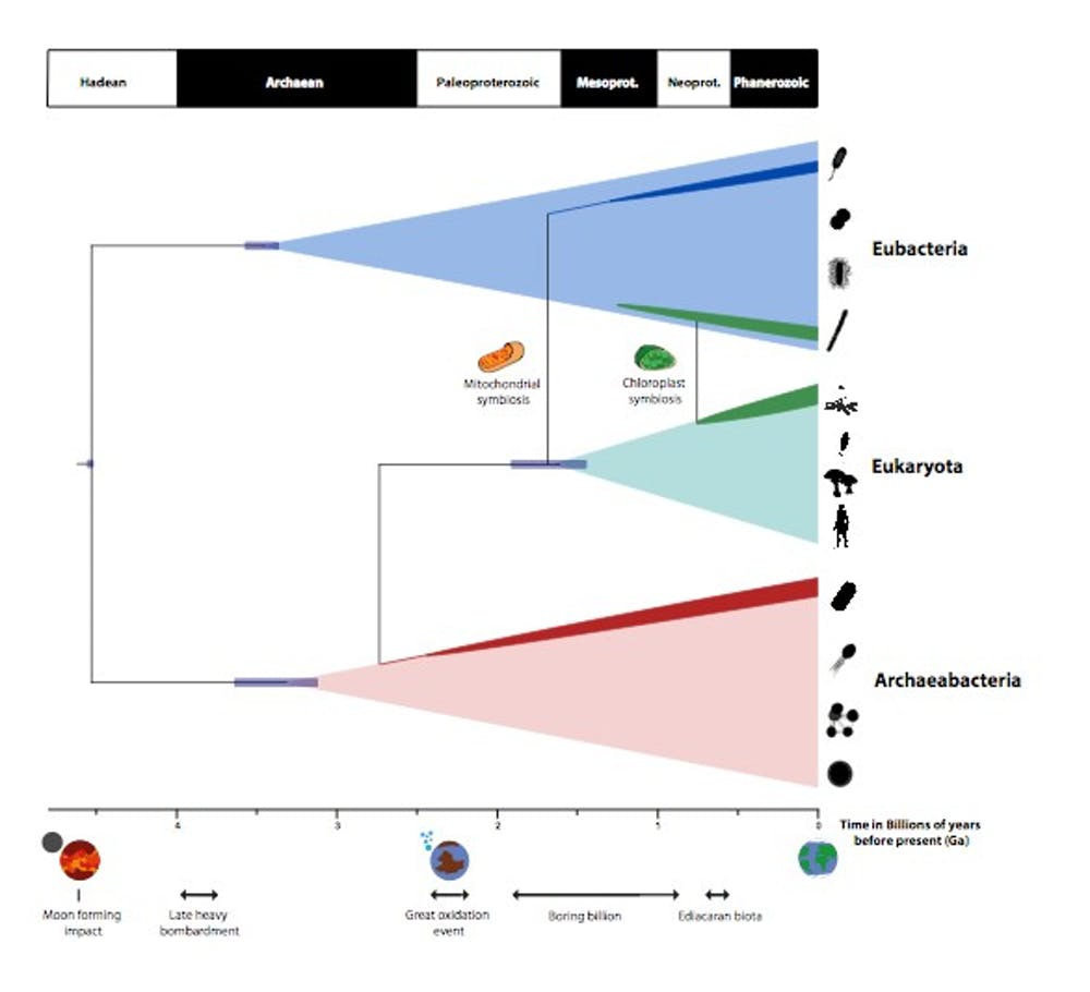 A timescale for the evolution of life on Earth summarising the findings of the new study. - Image Credit: University of Bristol