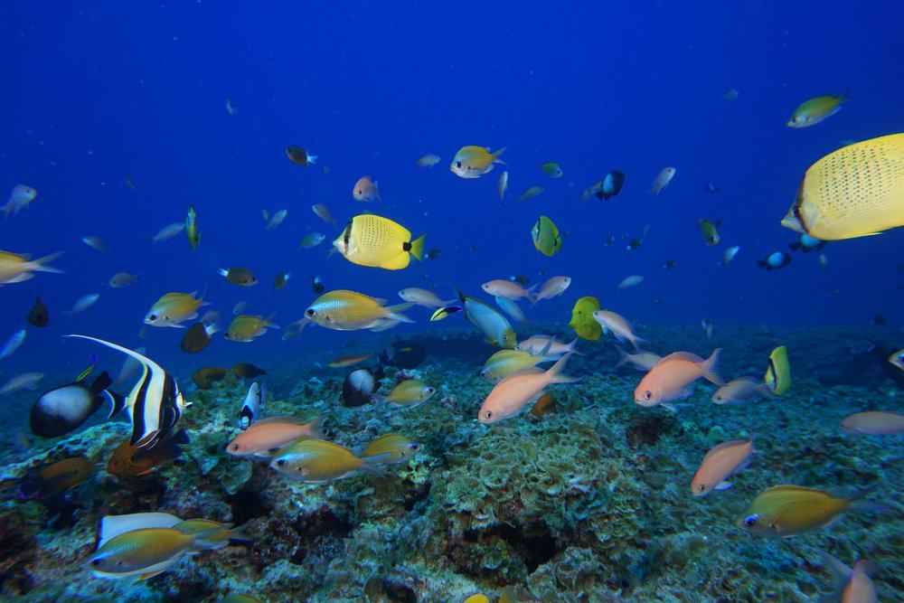 Image Credit:  Papahānaumokuākea Marine National Monument via flickr