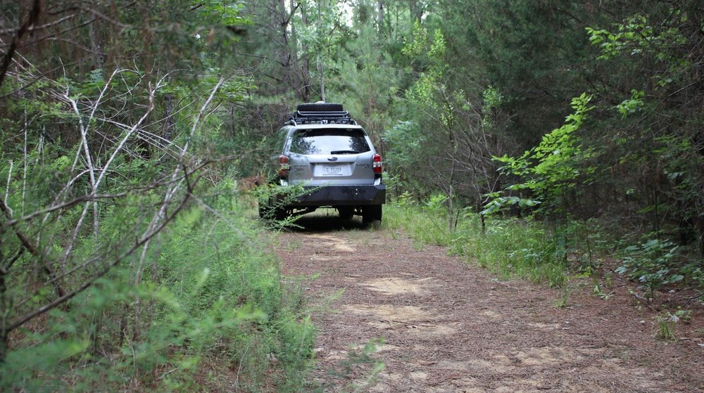 A self-driving car heads into the woods.- Image Credit: Matthew Doude, CC BY-ND