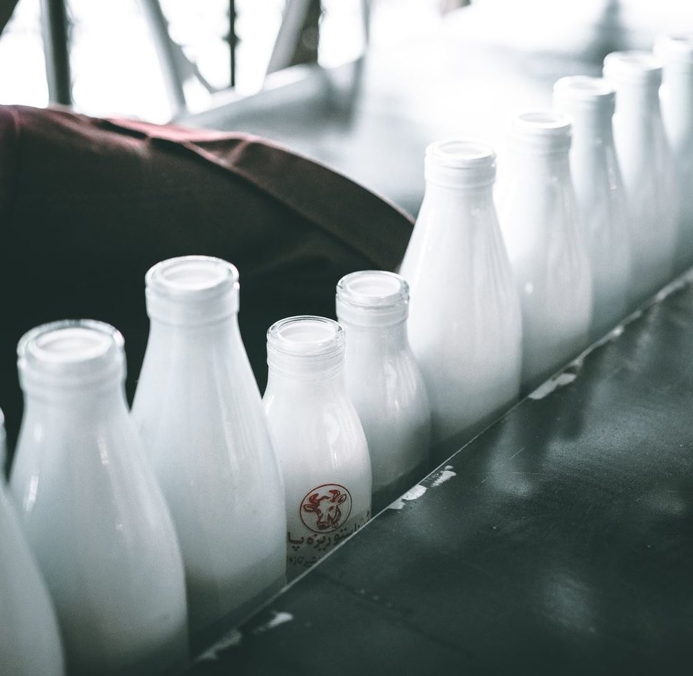 Evolution explains why we can still drink milk. - Image Credit:  Mehrshad Rajabi via Unsplash