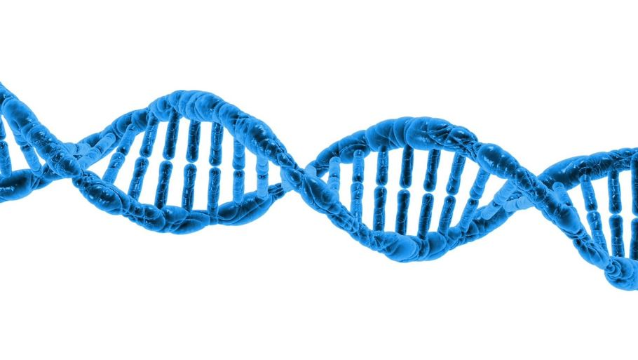 Biased DNA repairs can cause fast evolution of genes. - Image Credit:  PublicDomainPictures via Pixabay