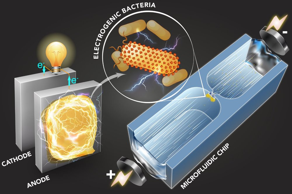 A microfluidic technique quickly sorts bacteria based on their capability to generate electricity. - Image Credit: Qianru Wang via MIT News
