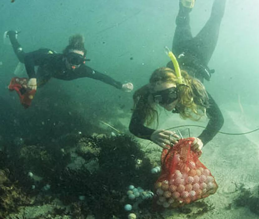 Alex Weber and Jack Johnston collecting golf balls from the sea floor. - Image Credit: Alex Weber,  CC BY-ND
