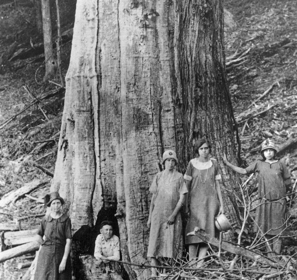 The family of James and Caroline Shelton poses by a large dead chestnut tree in Tremont Falls, Tennessee, circa 1920.- Image Credit:  Great Smoky Mountains National Park Library , CC BY-SA