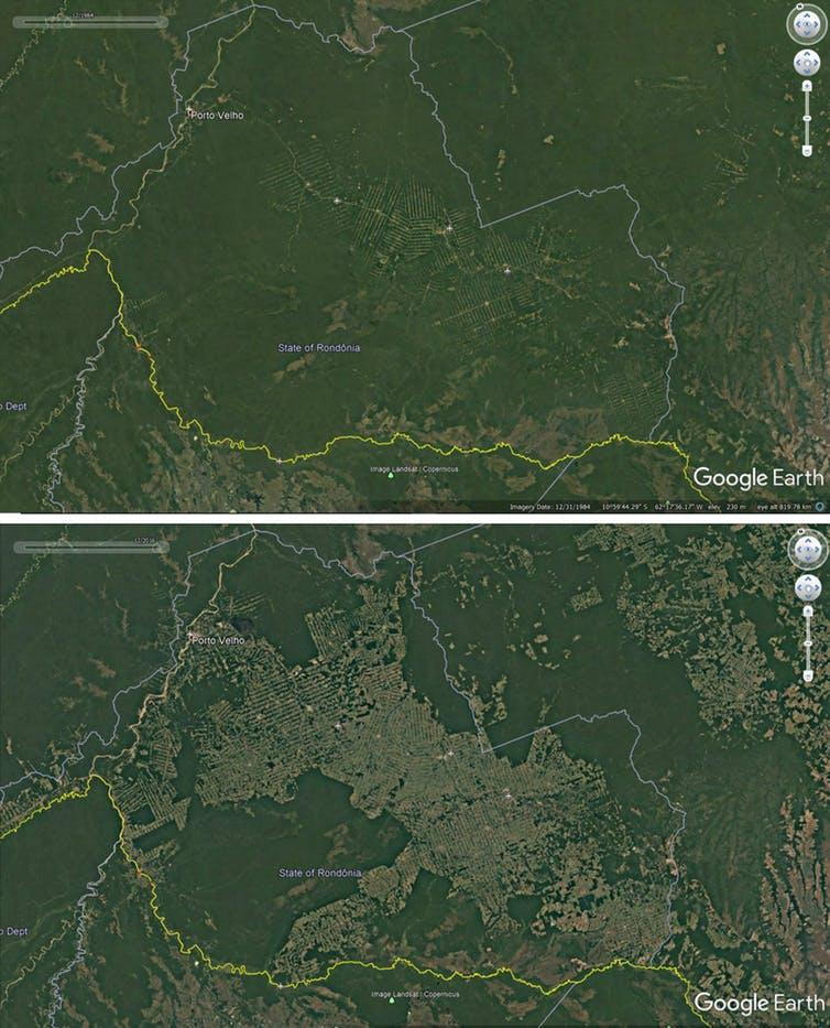 Deforestation around roads in Rondonia, Brazil, 1984-2016. - Credit: Google Earth