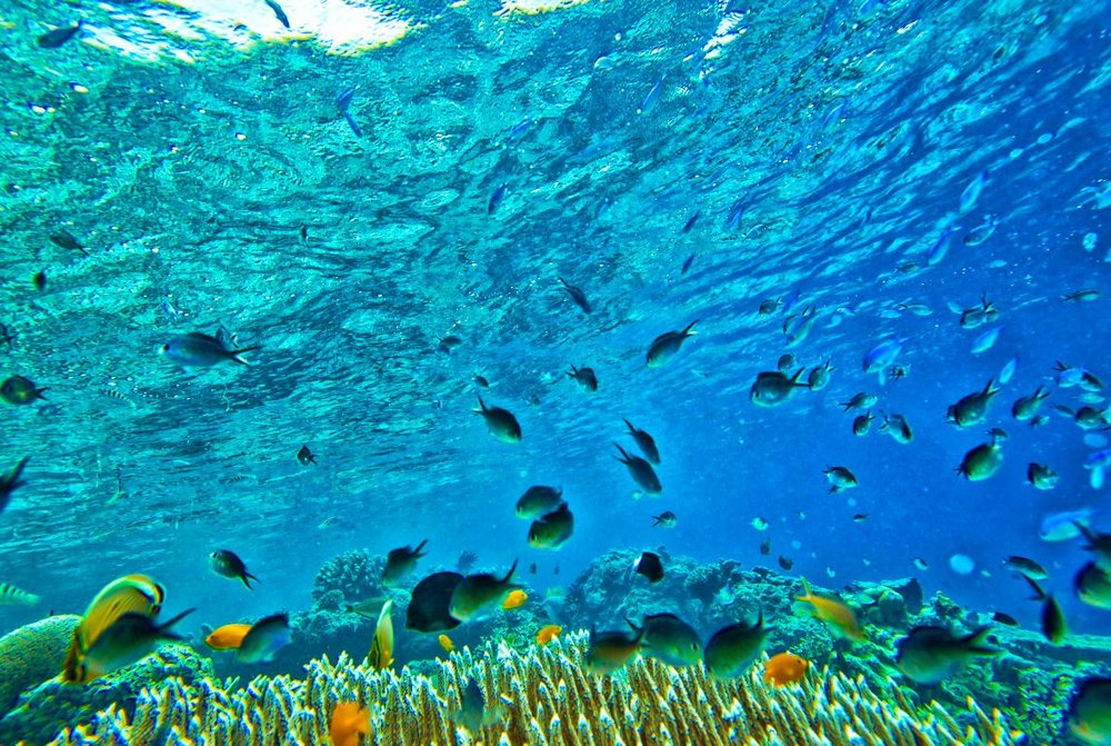 Tropical seas usually have the greatest variety of species - Image Credit:  Kanenori via Pixabay