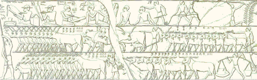 This scene depicts a cattle count (copied by the Egyptologist Lepsius). In the middle register we see 835 horned cattle on the left, right behind them are some 220 animals and on the right 2,235 goats. In the bottom register we see 760 donkeys on the left and 974 goats on the right. - Image Credit:  Wikimedia commons ,  CC BY