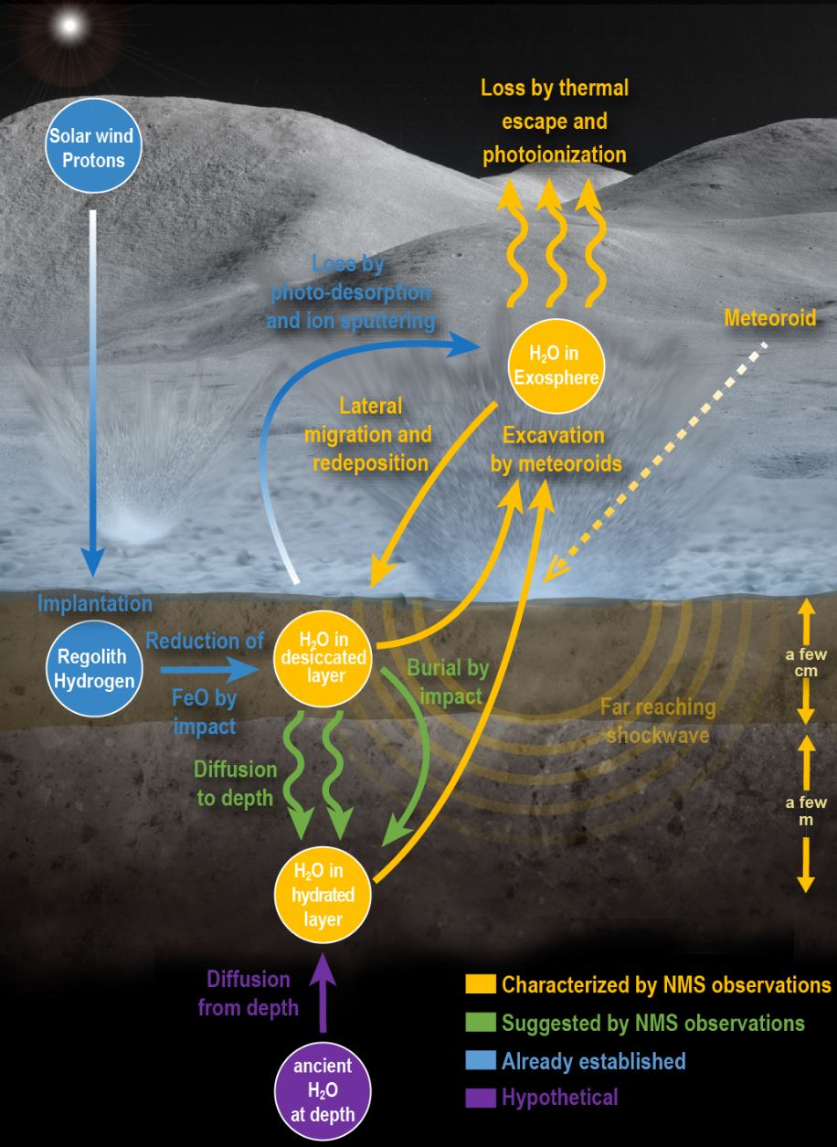 This infographic shows the lunar water cycle based on the new observations from the Neutral Mass Spectrometer on board the LADEE spacecraft. At the lunar surface, a dry layer overlays a hydrated layer. Water is liberated by shock waves from meteoroid impacts. The liberated water either escapes to space or is redeposited elsewhere on the Moon. Some water is created by chemical reactions between the solar wind and the surface or delivered to the Moon by the meteoroids themselves. However, in order to sustain the water loss from meteoroid impacts, the hydrated layer requires replenishment from a deeper ancient water reservoir. - Image Credit: NASA Goddard/Mehdi Benna/Jay Friedlander - (click to enlarge)