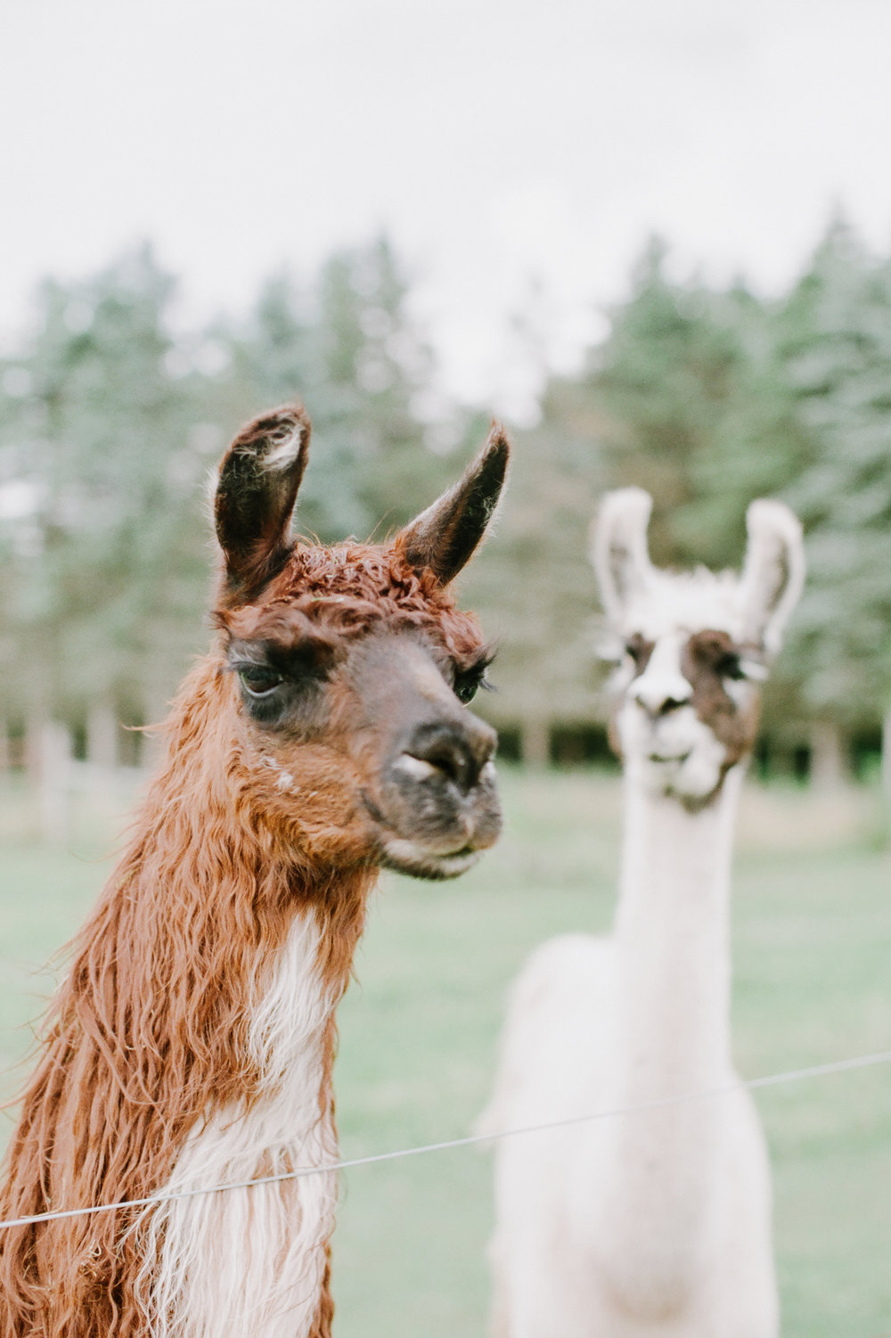 nj_alpaca-farm_wedding_inspiration-88.jpg
