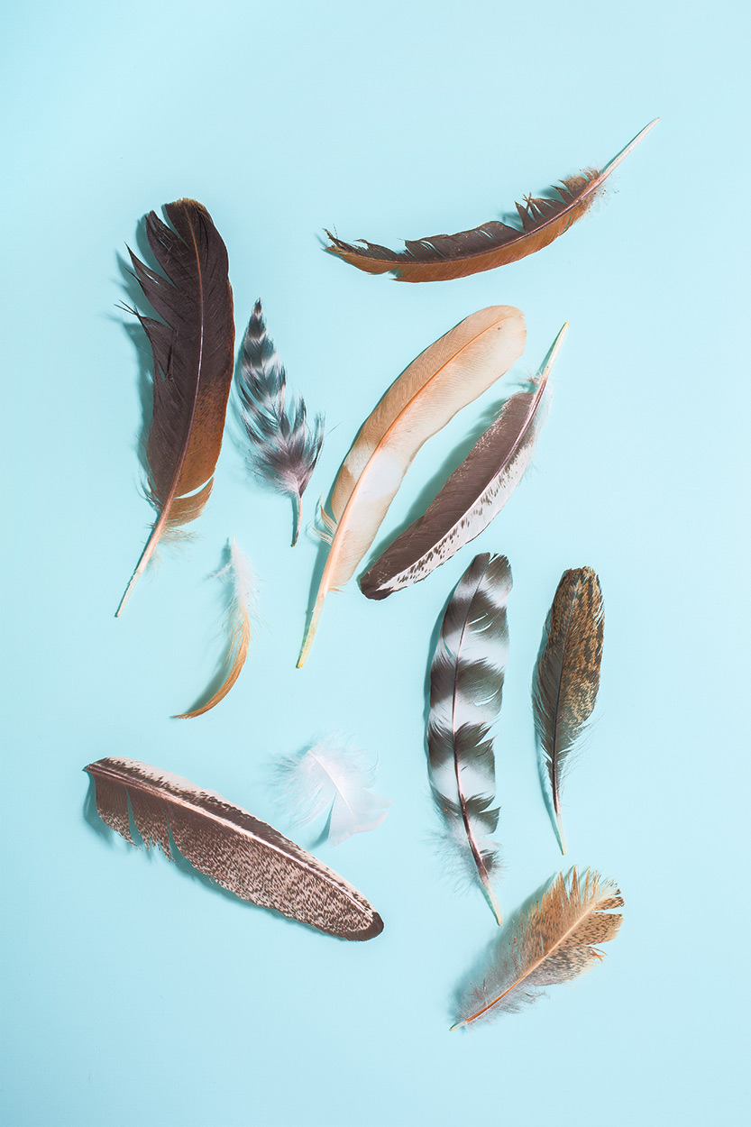 Feathers0454.jpg