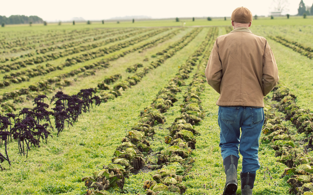 Meet Farmer Brown  Mustard Seed Farms grows certified organic produce in St. Paul, Oregon, and is People's largest supplier of Farm Direct produce.   Read the story