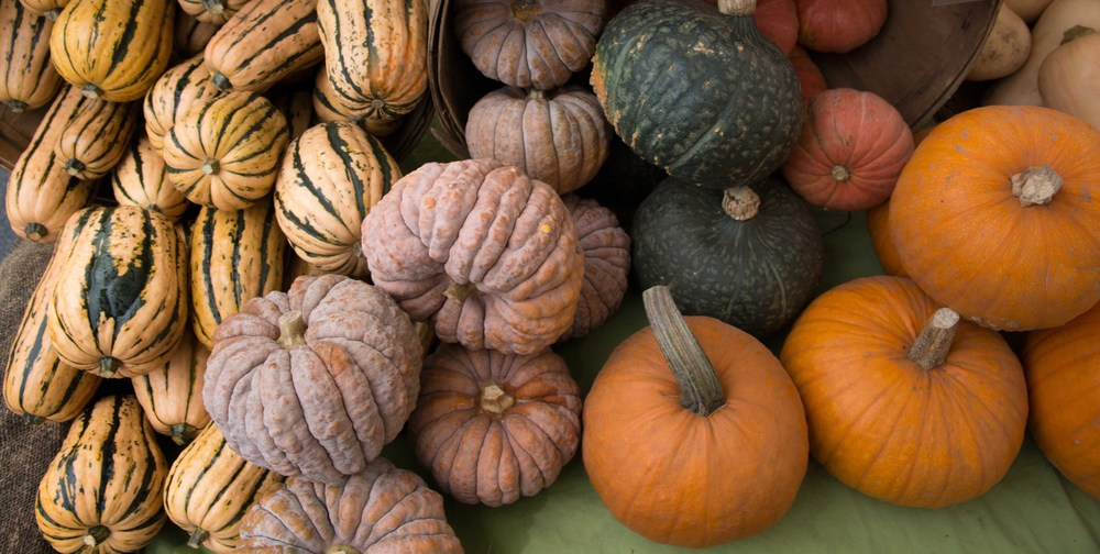 ALL WINTER SQUASH IS ON SALE FOR $0.99 PER LB! LOCAL? YES! ORGANIC? YES!