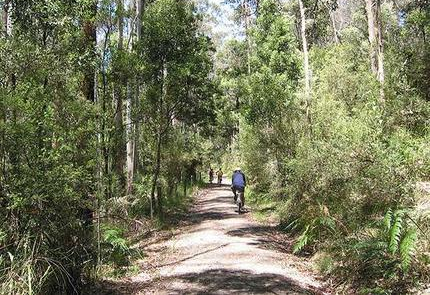 old beechy rail trail.jpg