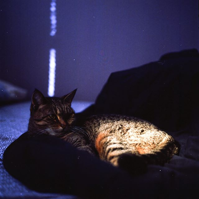 Frankie takes cat naps, Frankie doesn't do ice ❄️ #atx #film #hasselblad #catsofinstagram