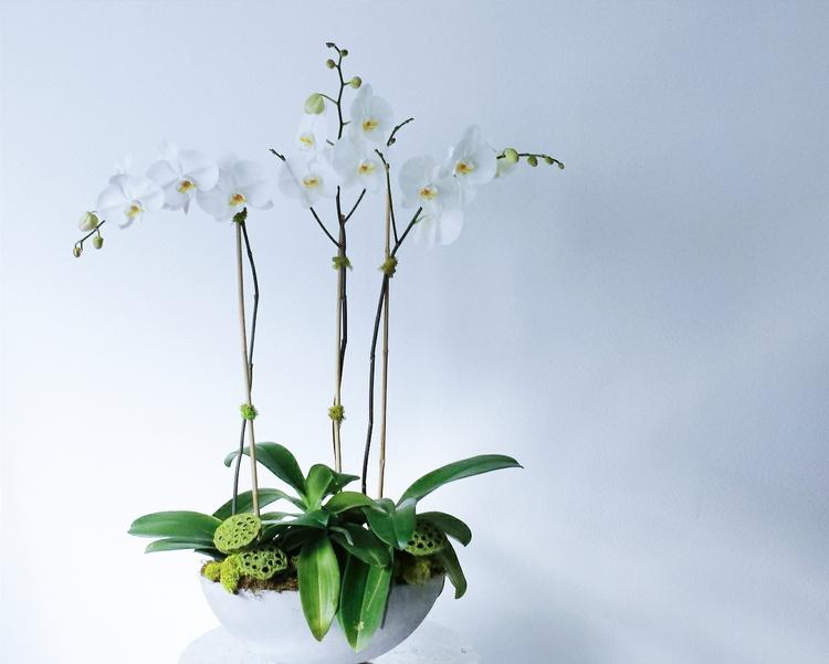 Mibellarosa Designs Houston Florist Modern floral online shop white orchids planter