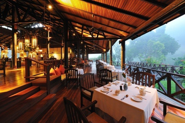 Dinner in the Rainforest
