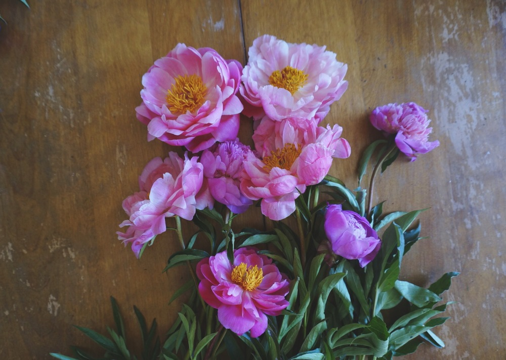 peonies from TJ's??? YES PLEASE.