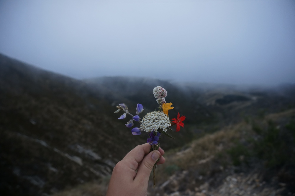 places and flowers