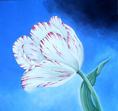 Tulip , 76x76cm £175
