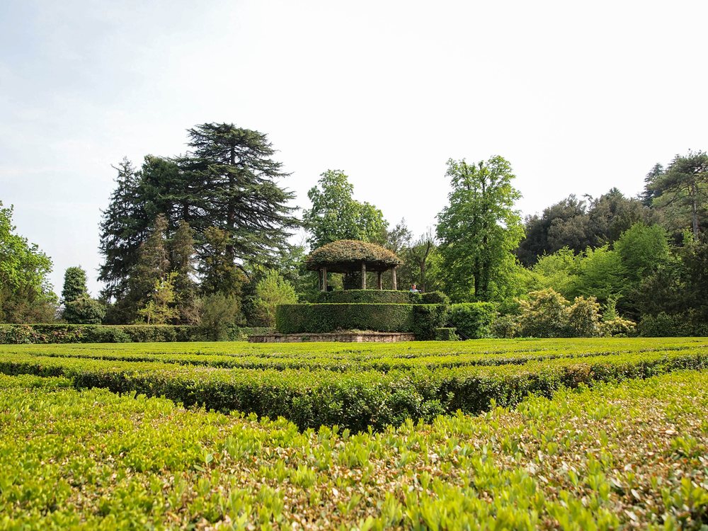A view from the maze of Villa Babarigo