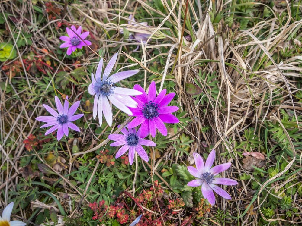 Cape-Kamenjak-Spring