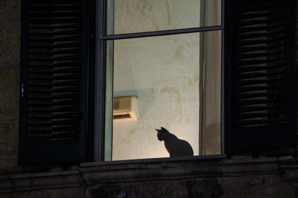 Cat-in-the-window