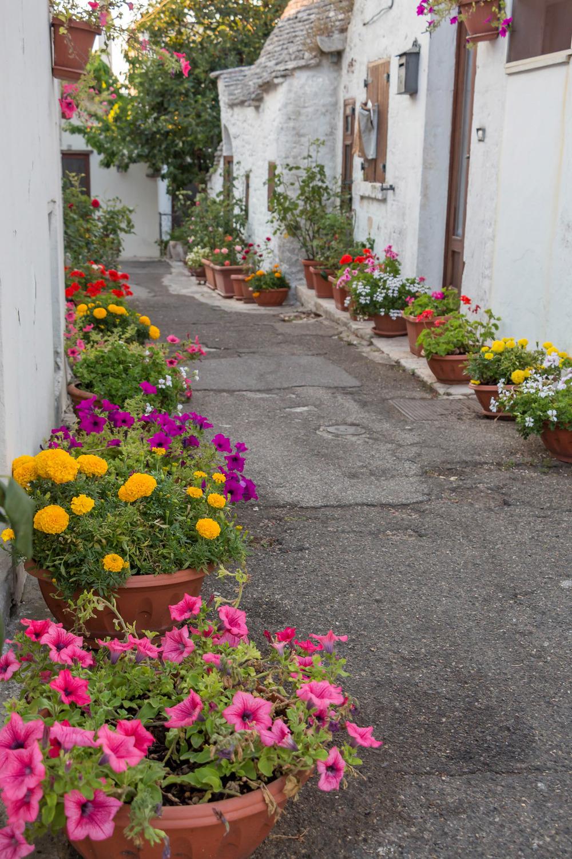 A flowery street in Alberobello