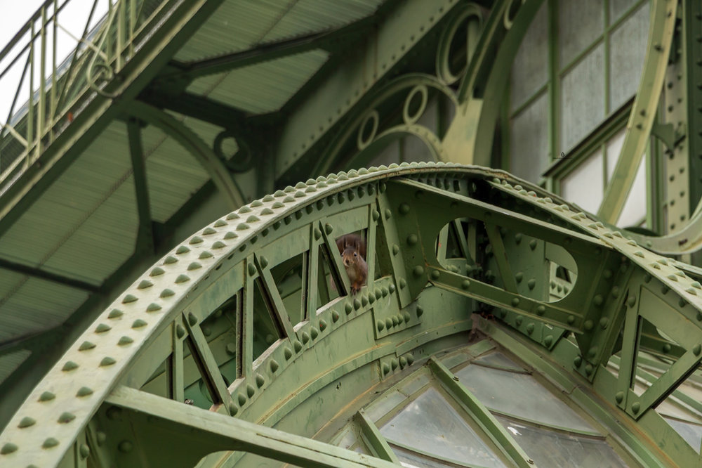 Schonbrunn-Glasshaus