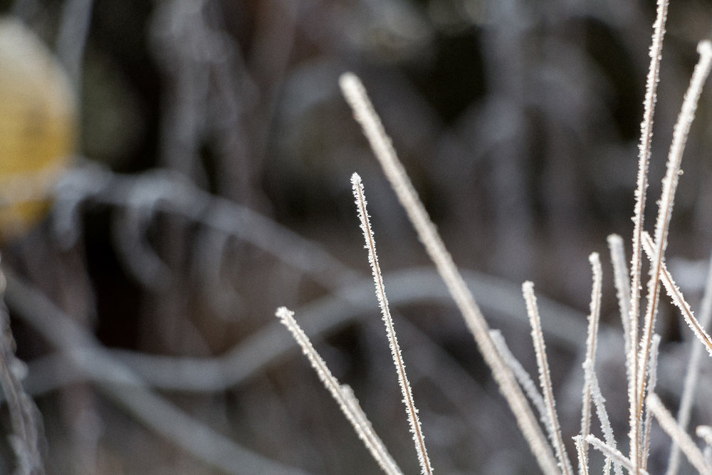 Frozen-grass