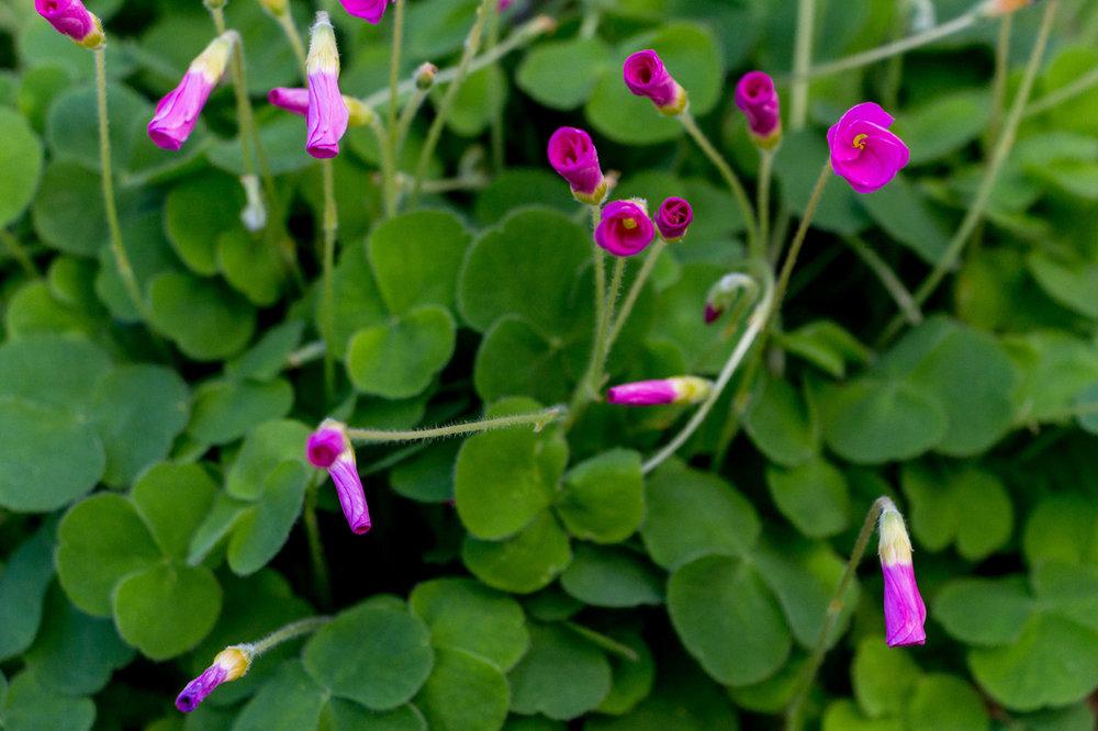 Kew-Gardens-Flowers
