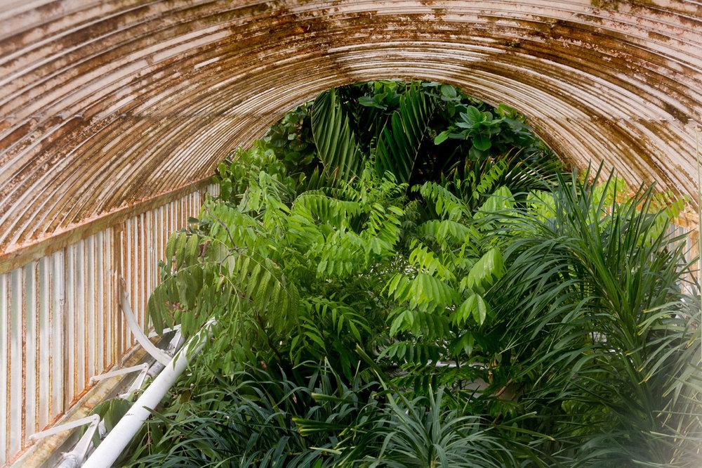 Kew-gardens-glasshouse