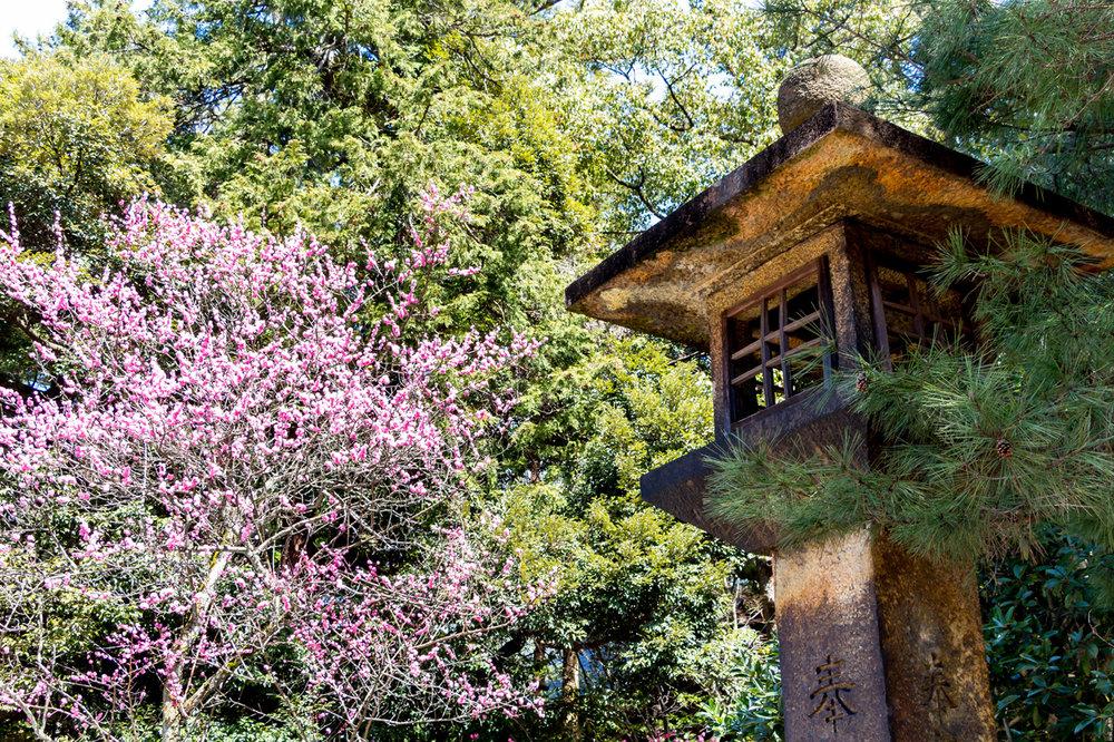 Kanazawa-Oyama-garden