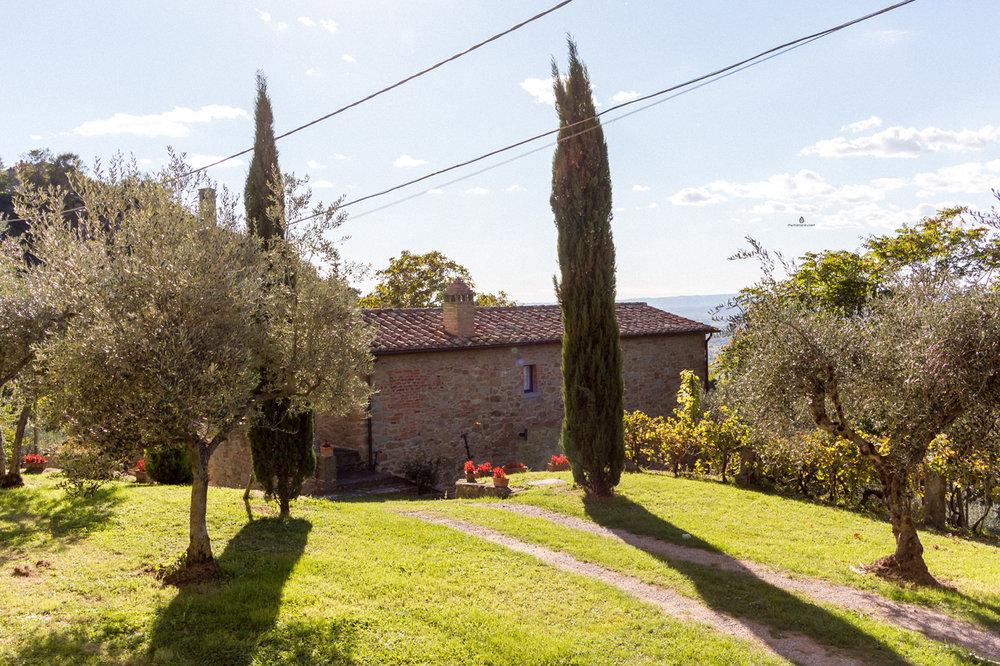 Cortona-cypress