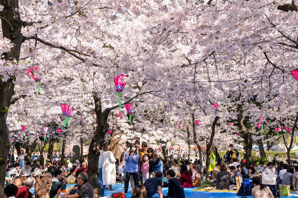 Tsurumai Park, Nagoya