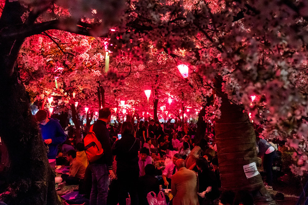 Hanami by night, Nagoya