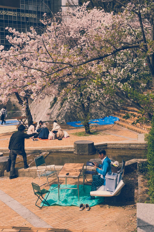 Cherry blossom viewing in Kobe