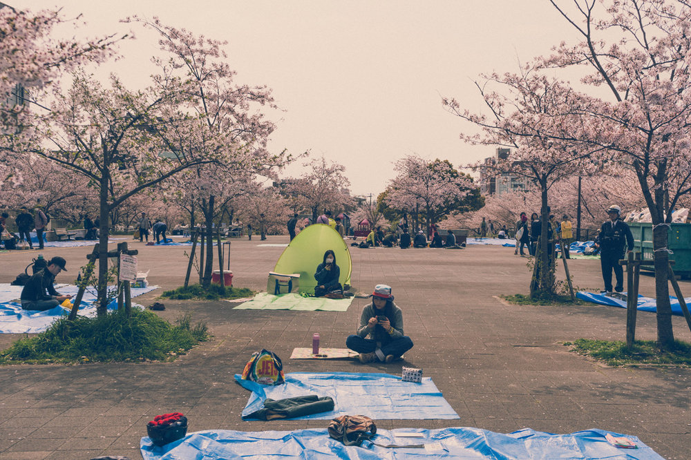 Sakura viewing in Kobe