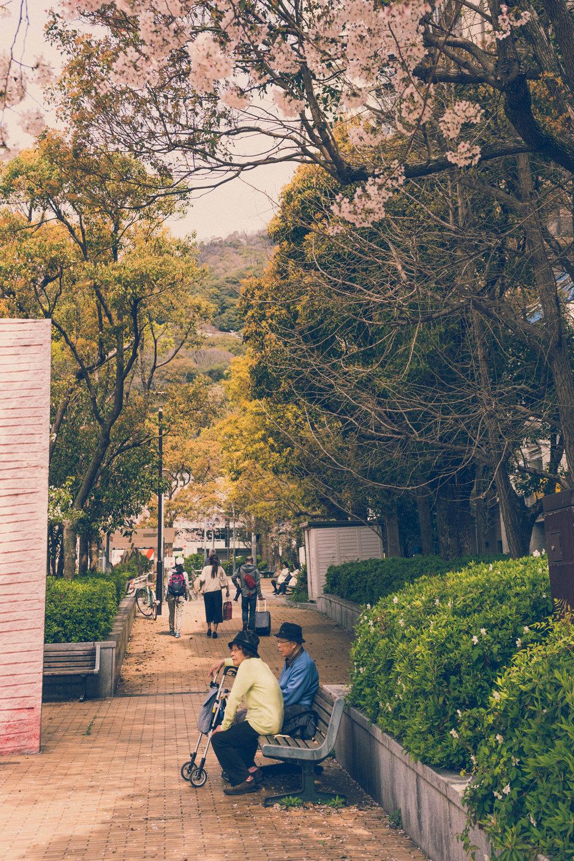 Cherry blossom time in Kobe